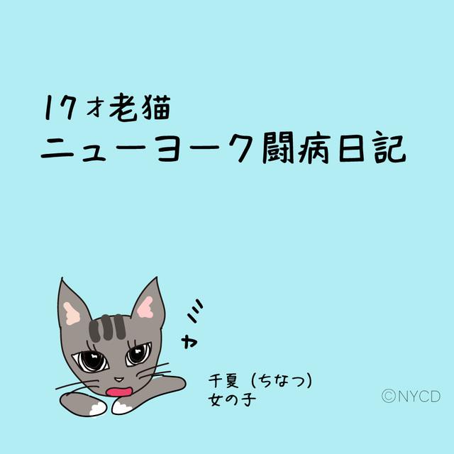 17才 猫の千夏の物語