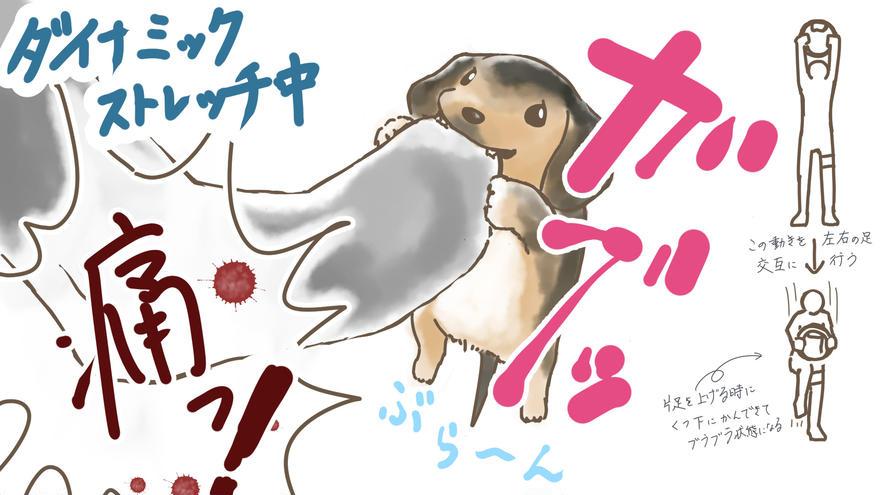 犬とリングフィットアドベンチャー⑤