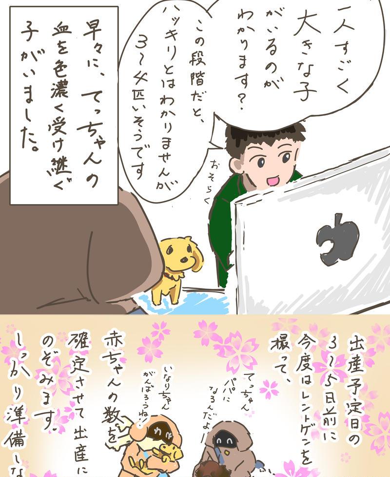 第6話「パピーズ3姉妹が生まれるまで②」