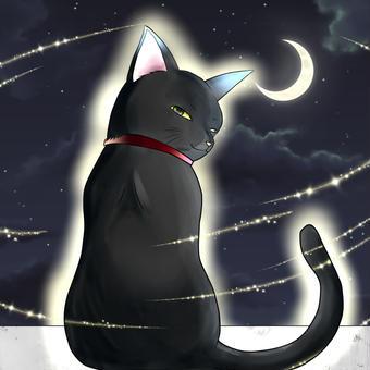 月明かりの黒猫