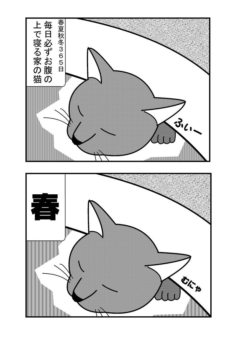 家の猫のお話