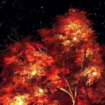 ぼんぼりと紅葉