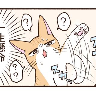 扇風機と戦う猫がかわいい