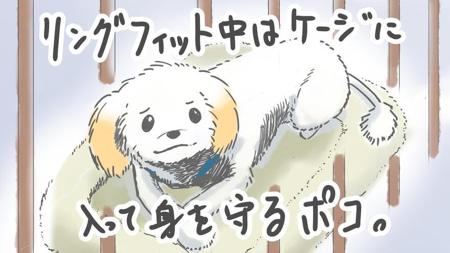 犬とリングフィットアドベンチャー④