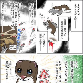 飯綱(イイズナ)の狩り