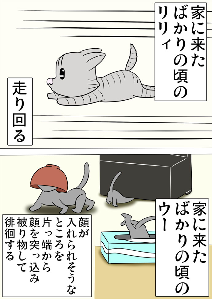 ミーのおもちゃ箱 第1359話~第1364話