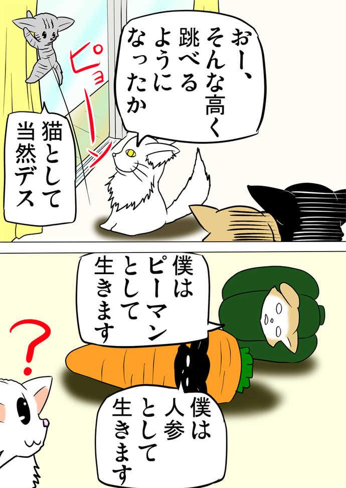 ミーのおもちゃ箱243話