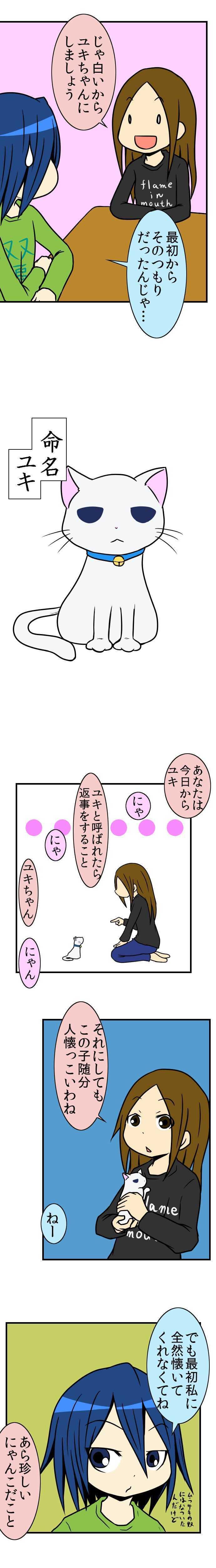 29術目:忍ぶにゃんこ(其の参)
