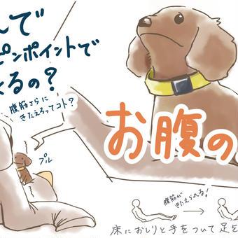 犬とリングフィットアドベンチャー⑦