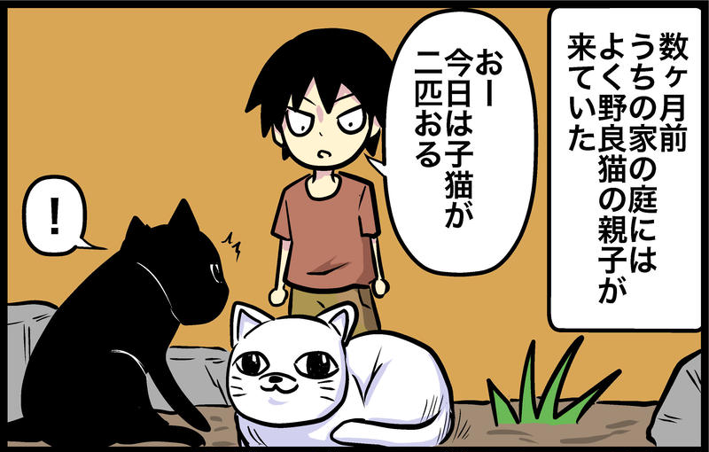 4コマ「子猫」