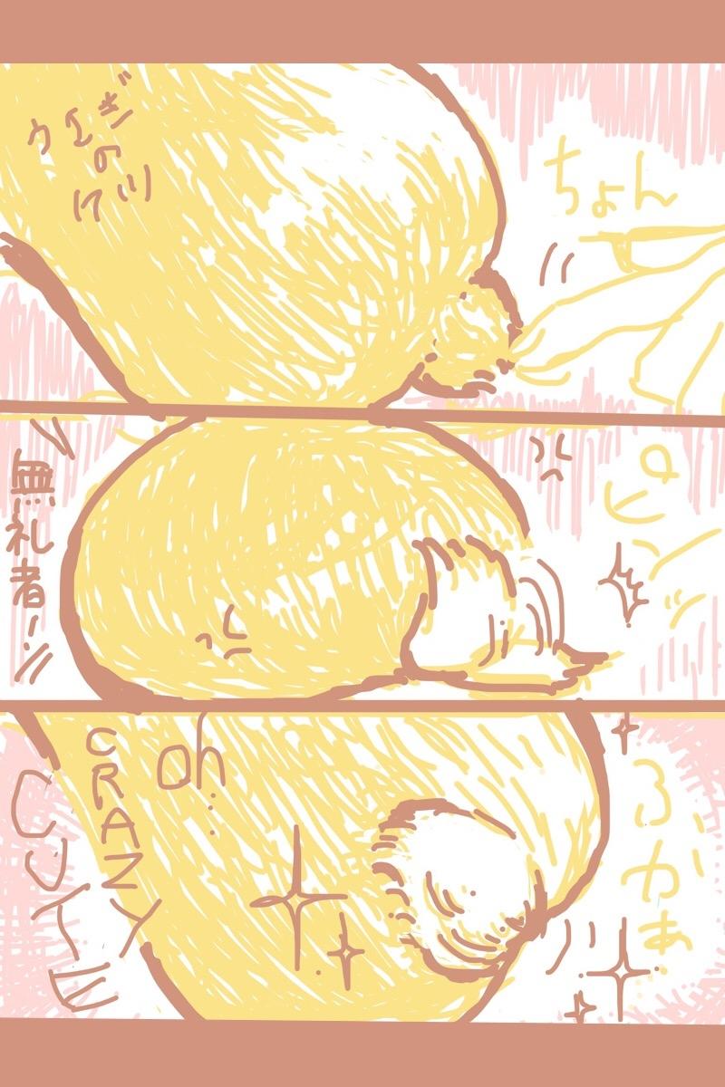 しっぽ is cute